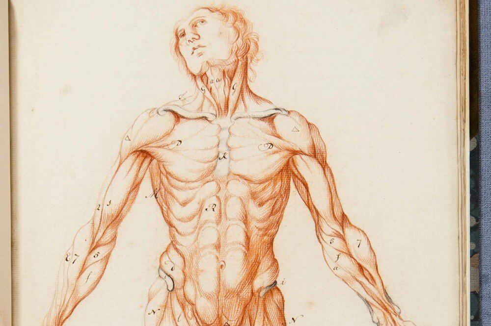 illustration of a man's body
